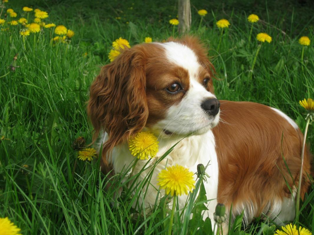 dresseur de chien les herbiers
