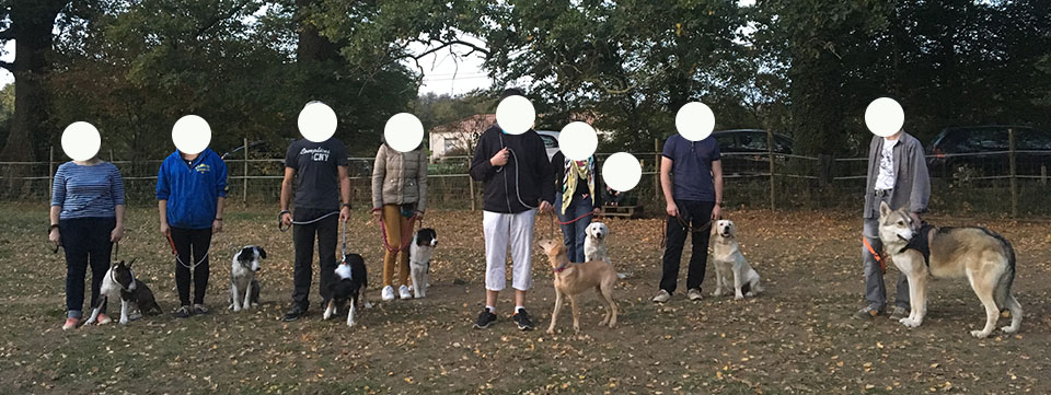 école pour chien vendée