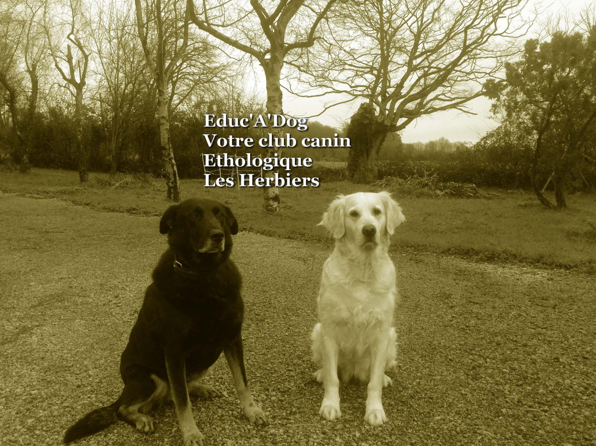 Petit logo club canin les herbiers