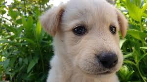 éducateur chien vendée