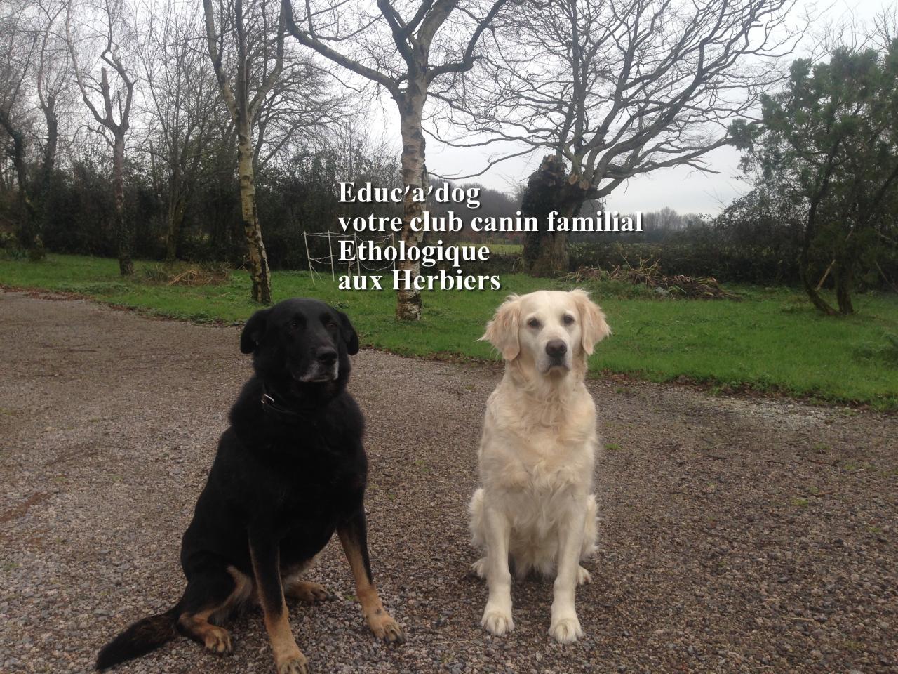 tout sur le chien