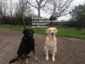 club canin educ'a'dog les herbiers